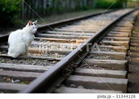 寒川の丸太の広場にいるノラ猫 31344126