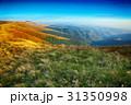 丘 丘陵 坂の写真 31350998