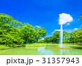 代々木公園 公園 夏の写真 31357943