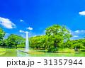 代々木公園 公園 夏の写真 31357944