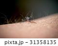 蚊 31358135