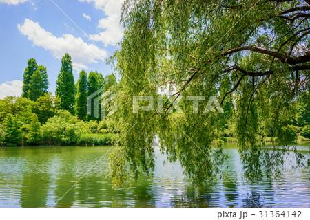 池と樹木 31364142