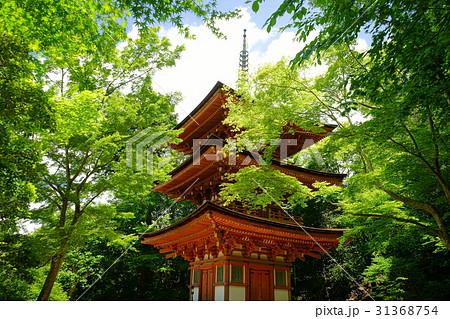 浄瑠璃寺・三重塔と青もみじ3 31368754