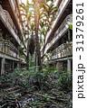 Jungle overgrown buildings 31379261