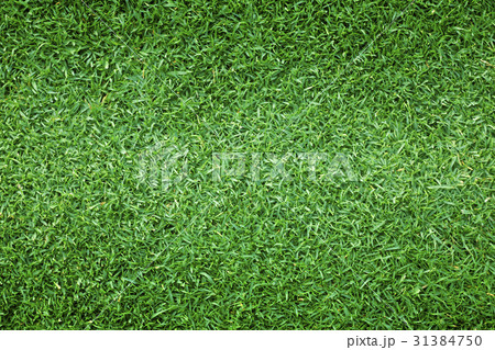 grass background Golf Courses green lawn 31384750
