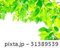 新緑 葉 植物の写真 31389539