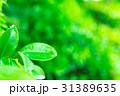 爽やかな新緑イメージ 森林 葉っぱ エコロジー 見上げる 植物 春イメージ 31389635