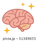 脳 脳味噌 ベクターのイラスト 31389655