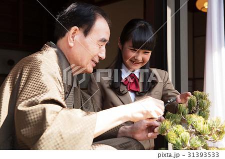 お金持ちの家族 盆栽の手入れ 31393533