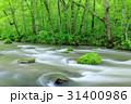 青森_新緑の奥入瀬渓流 31400986