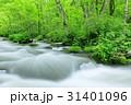 奥入瀬渓流 三乱の流れ 新緑の写真 31401096