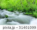 奥入瀬渓流 三乱の流れ 新緑の写真 31401099