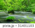 奥入瀬渓流 三乱の流れ 新緑の写真 31401103