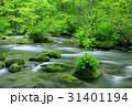 奥入瀬渓流 ツツジ 新緑の写真 31401194