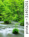 奥入瀬渓流 新緑 渓流の写真 31401201