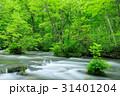 奥入瀬渓流 ツツジ 新緑の写真 31401204
