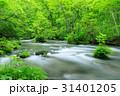 奥入瀬渓流 ツツジ 新緑の写真 31401205