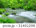奥入瀬渓流 ツツジ 新緑の写真 31401206