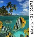 南国 水中 熱帯魚の写真 31402078