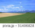 麦畑 雲 空の写真 31406828
