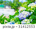 紫陽花 あじさい 花の写真 31412553