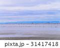 【千葉県】江川海岸で潮干狩りをする人達 31417418