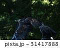 イヌワシ 鷲 鳥の写真 31417888