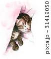 猫 子猫 動物のイラスト 31419050