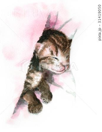 眠る子猫 31419050