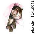 猫 子猫 動物のイラスト 31419051