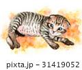 猫 子猫 動物のイラスト 31419052