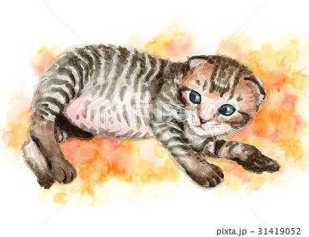 子猫 31419052