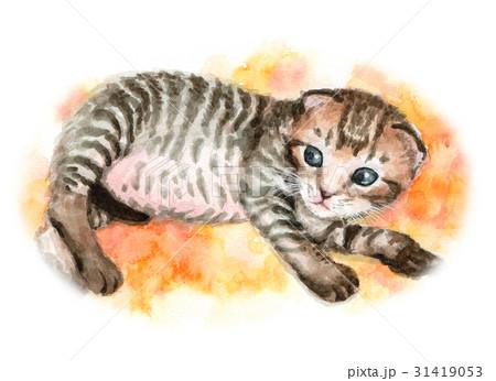 子猫 31419053