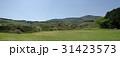 伊豆稲取 細野高原 大草原の写真 31423573