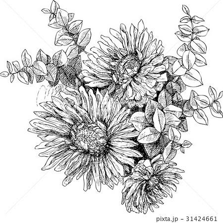 Vintage botanical illustration blossom garden 31424661