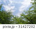 新緑と青空 31427202