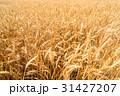 麦畑 31427207
