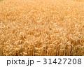 麦畑 31427208