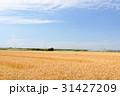 麦畑と青空 31427209