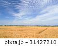 麦畑と青空 31427210