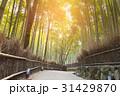 背景 バンブー 竹の写真 31429870