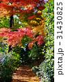 秋の散歩道 31430825