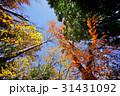 秋 紅葉 木々の写真 31431092