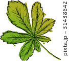 Watercolor Paint Of Palmate Leaf 31438642