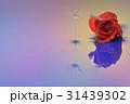 水滴写真 タンポポ綿毛 31439302