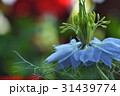 植物 花 ニゲラ 31439774