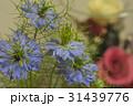 ニゲラ 花 31439776