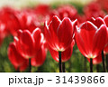 ちゅーりっぷ2150 31439866