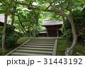 北鎌倉 円覚寺 31443192