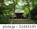 北鎌倉 円覚寺 31443195